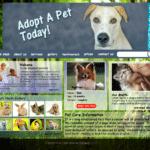 animals-&-pets